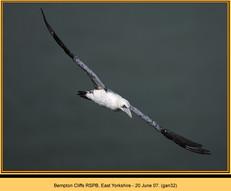 gannet-32.jpg