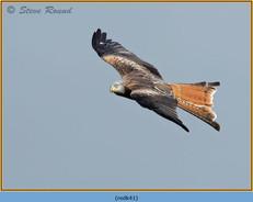 red-kite-41.jpg