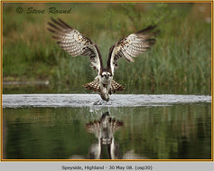 osprey-30.jpg