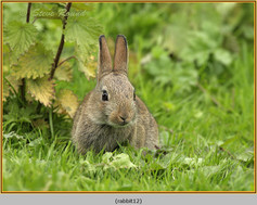 rabbit-12.jpg