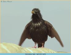 spotless-starling-25.jpg