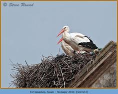 white-stork-16.jpg