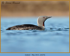 red-throated-diver- 74.jpg