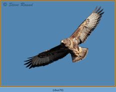 buzzard- 70.jpg