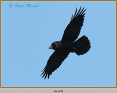 raven-29.jpg