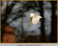 barn-owl-14.jpg