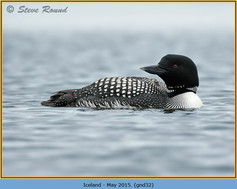 great-northern-diver-32.jpg