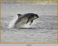 bottlenose-dolphin-01.jpg