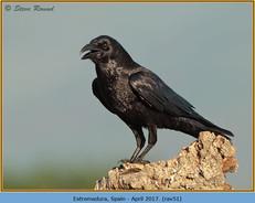raven-51.jpg