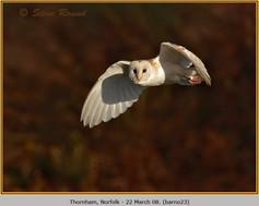 barn-owl-23.jpg
