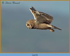 short-eared-owl-79.jpg
