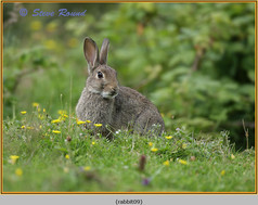 rabbit-09.jpg