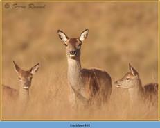 red-deer-49.jpg