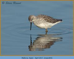 marsh-sandpiper-04.jpg