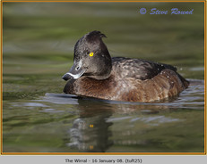tufted-duck-25.jpg