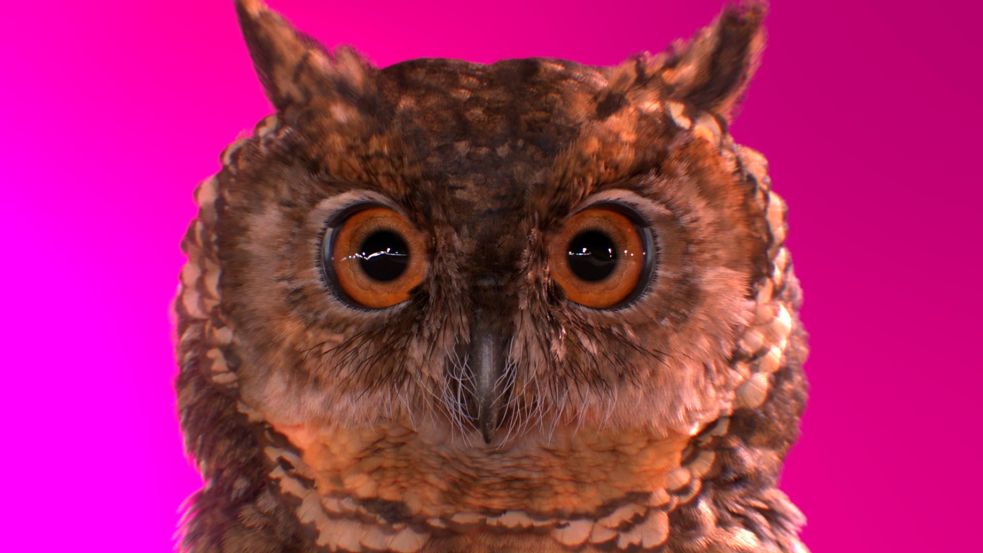 owl_A