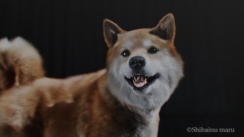 デジまる 柴犬まるCGver