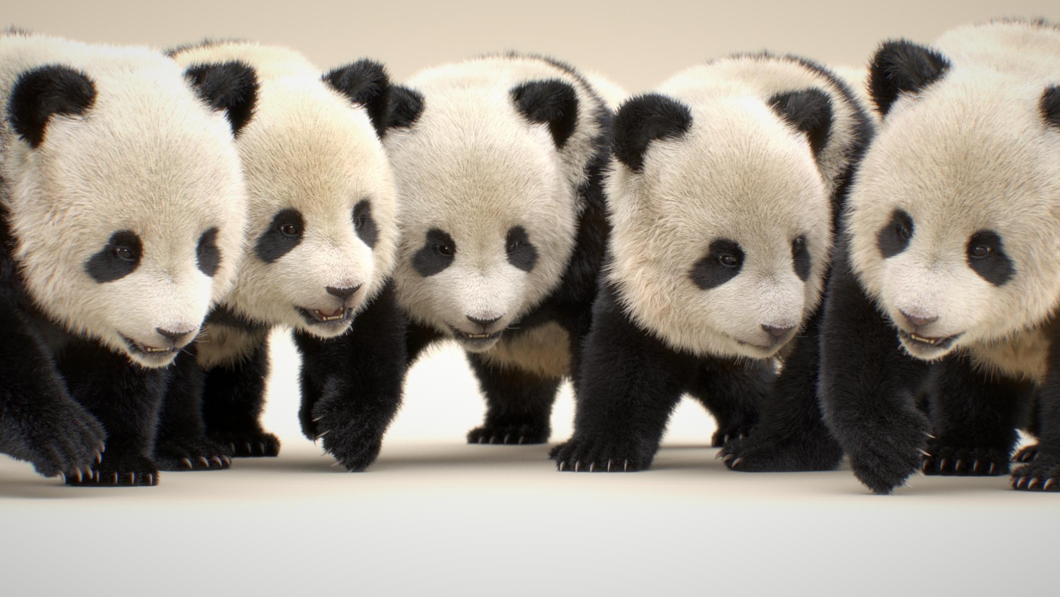 panda_fix