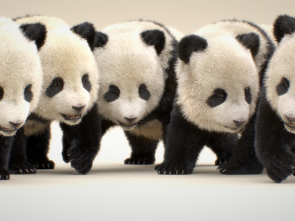 パンダは冬眠しないのか?
