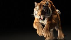 tiger_stillB_170605