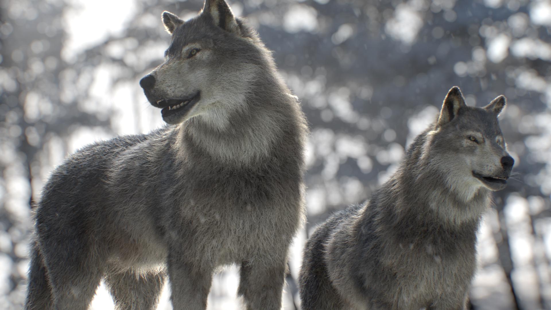 wolf_v07.0234
