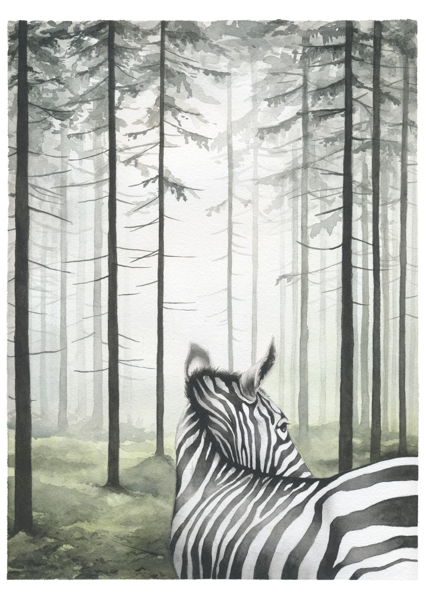 Lost Zebra