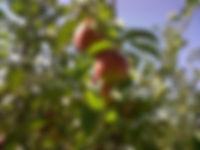 IMG00366-20110914-1030.jpeg