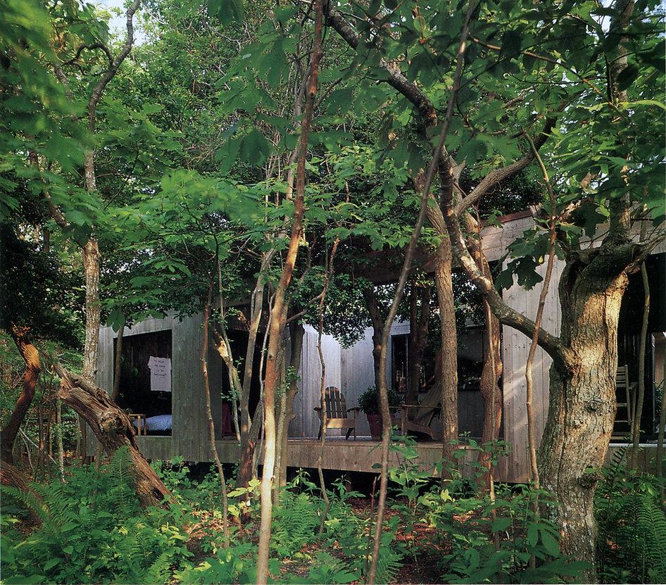 2_exterior trees.jpg