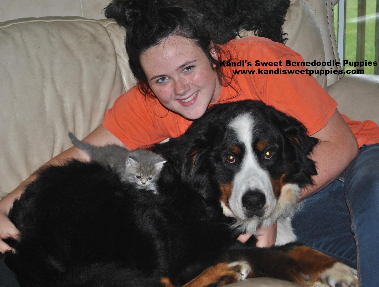 Bernedoodle Puppies, Bernedoodle Breeder 2014-2-2-17:44:20
