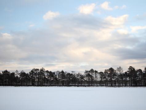 2016. gada 3. decembris. Ziemas meklējumi Jūgu purvā
