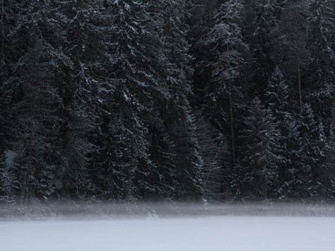 2019. gada 26. janvāris. Igaunija. Pārgājiens gar Ahjas upes krastiem Kiidjärve - Taevaskoja – Kiidj