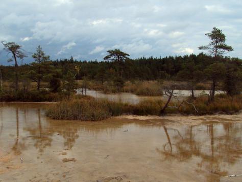 2018. gada 30. septembris. Latvija, Ķemeru Nacionālais parks. 14 km pārgājiens gar Zaļo kāpu