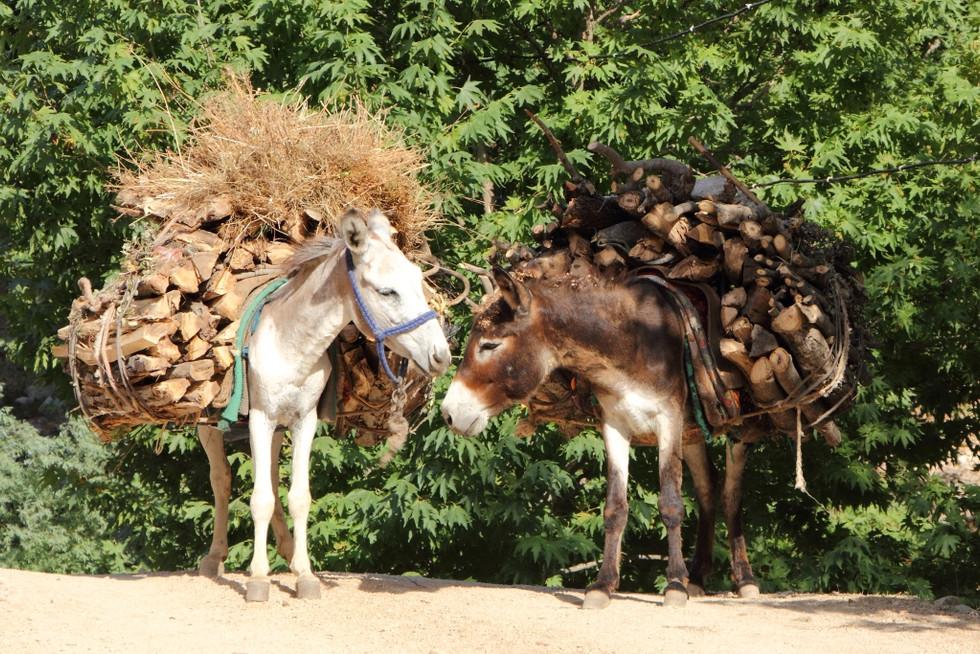 2017. gada 16. jūlijs. Tadžikistāna, Varzobe. Nastu nesēji ēzelīši un kalnu prieki