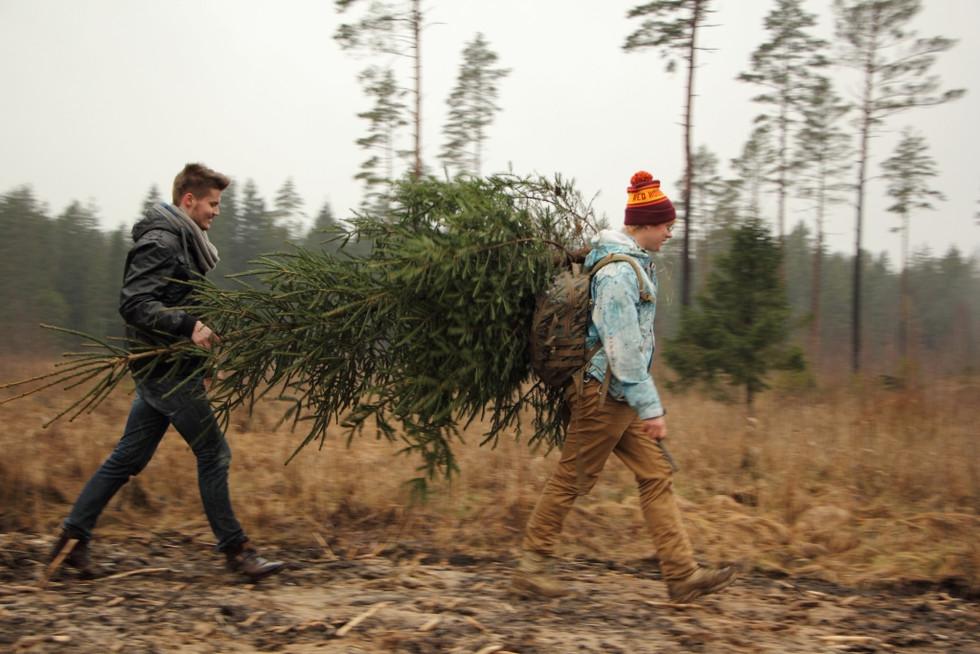 2016. gada 23. decembris. Ēriks Latvijā. Ķemeru plašumi, eglītes meklējumi un ežu cepšana