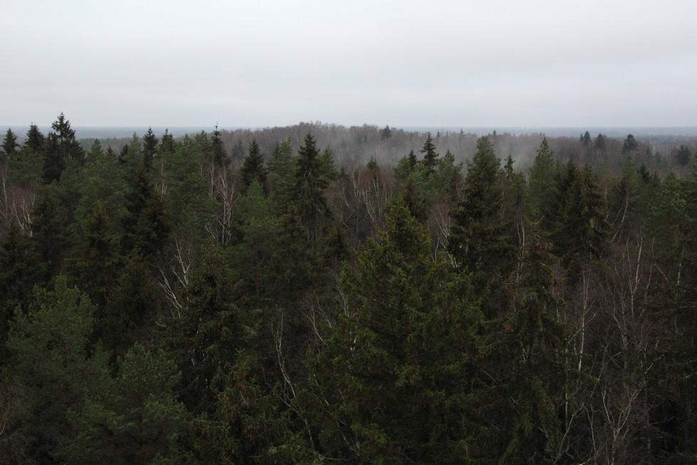 2017. gada 18. novembris. Latvija. 20 km pārgājiens Ogre – Salaspils un Zilo kalnu plašie skati