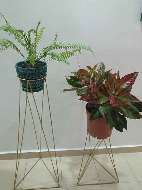 Macetero Triangulares para tus Plantas