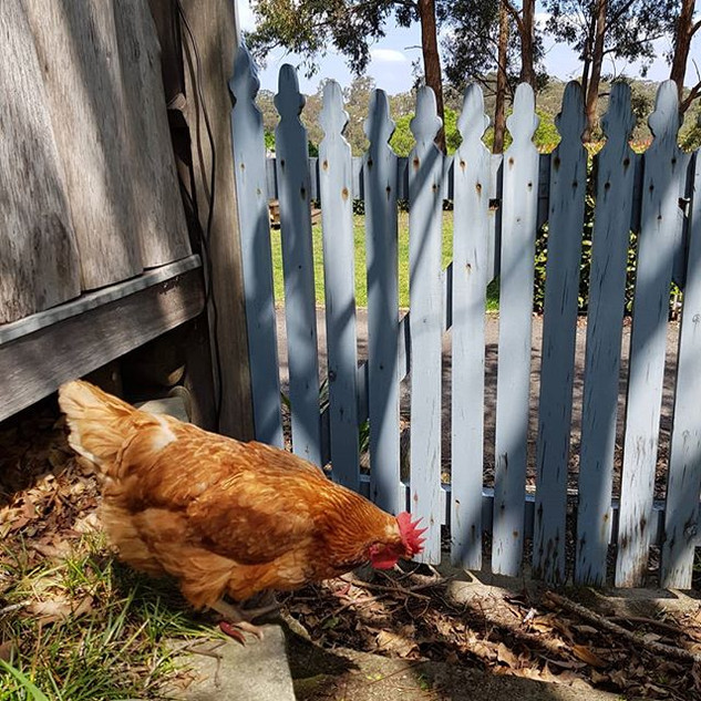 Explore says the chook #farmstay #airbnb