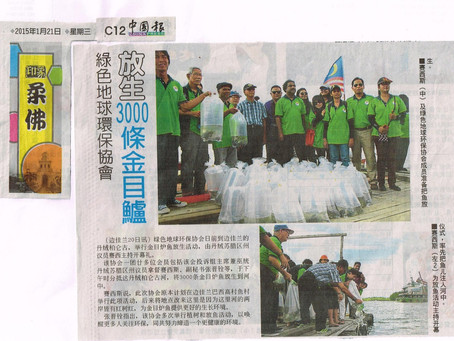GES releases 3,000 Siakap fish fries in Pengerang 17th January 2015