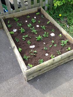 Planter in Purple Garden
