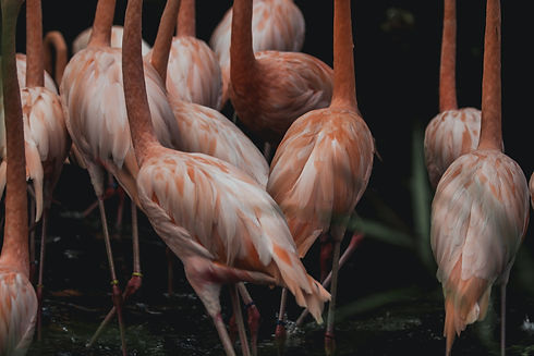 pink-flamingo-bodies.jpg