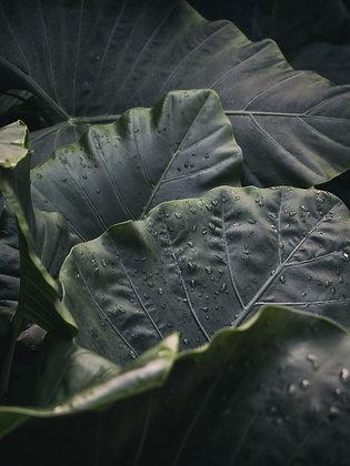 Planta 3