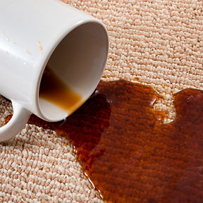 Home mishap, stained carpet, and domesti