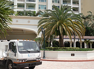 Palm Tree Pest Control in Boca Raton, Delray Beach, and Palm Beach County