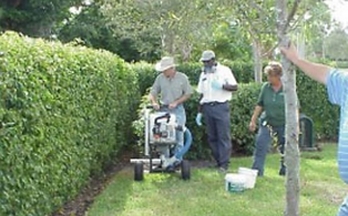 Whitefly Pest Control in Boca Raton, Delray Beach, and Palm Beach County