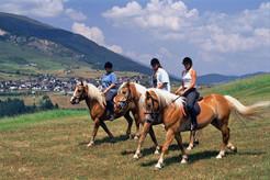 Haflinger (c) Serfaus-Fiss-Ladis_Tirol.jpg