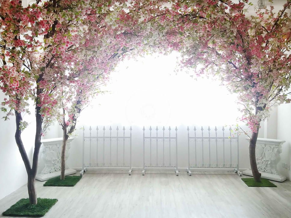 flower,pink,plant,wall,tree