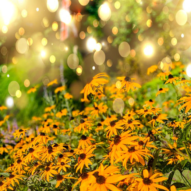 "Raining Sundrops by Kayla Sharp Photograph 14"" x 18"" (matted/framed)"