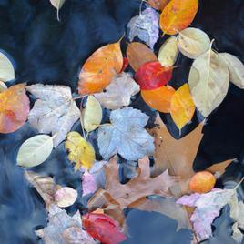 """Autumn Dream Rob Kovacs Photo on Canvas  16"""" x 20""""  $130"""