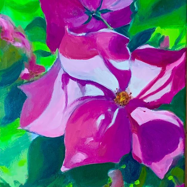 """Pride In Bloom by Aviva Feigenheimer Oil on Canvas 16"""" x 20"""" (unframed)"""
