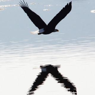 Eagle on the Hudson